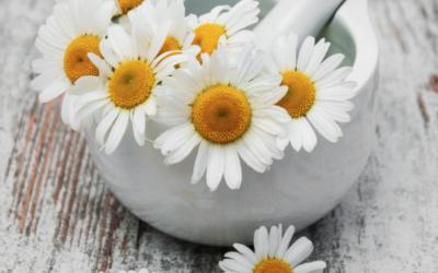 Flowers in Medicine